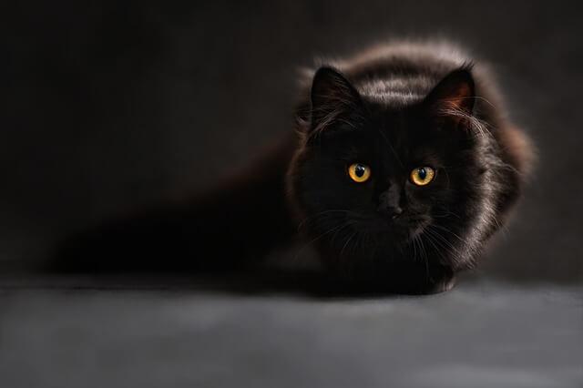 Czarny kot z błyszczącymi, żółtymi oczami
