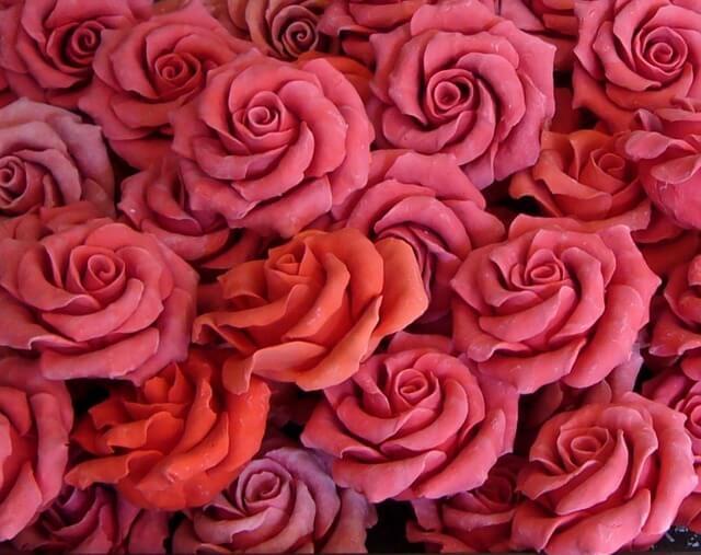 Mnóstwo czerwonych róż