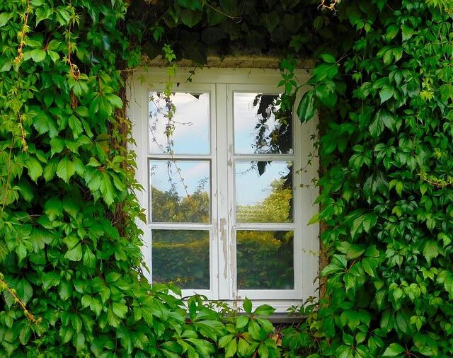 okno otoczone bluszczem