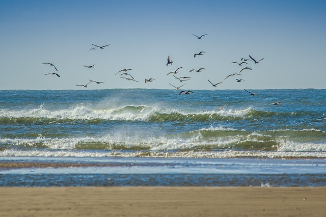 Mewy latające nad morzem