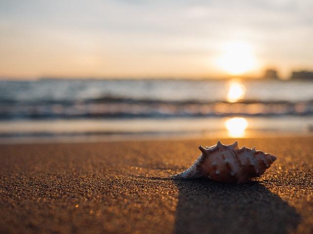 Muszla leżąca na plaży