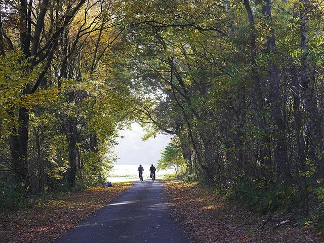 Rowerzyści w lesie